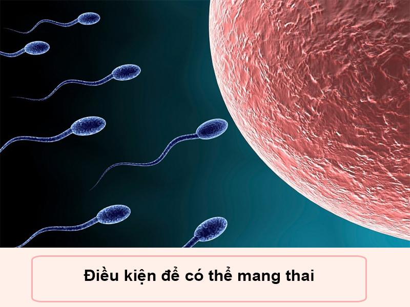 Cần điều kiện trứng gặp được tinh trùng